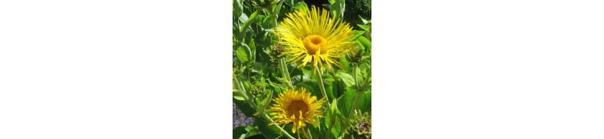 Liste de toutes les plantes aromatiques de la pépinière Arom'antique