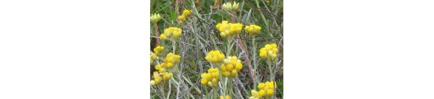 Classement des plantes aromatiques de la pépinière Arom'antique par noms français.