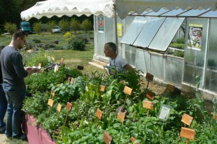 vente de plantes aromatiques.JPG