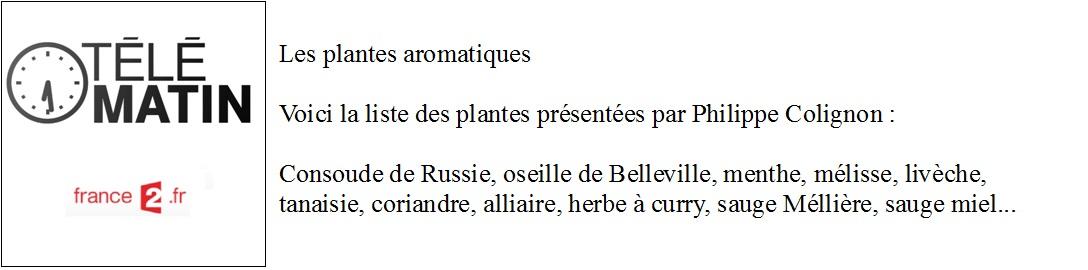 telematin sur les plantes aromatiques.jpg