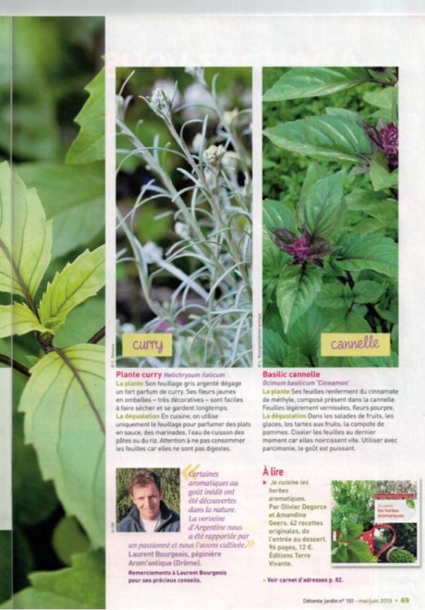 Aromatiques dans Détente jardin