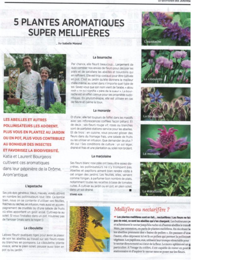 article de presse arom'antique
