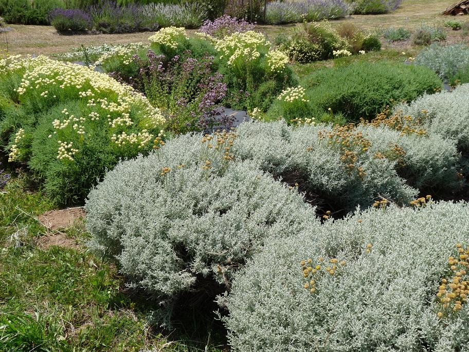 Jardin de plantes aromatiques.jpg