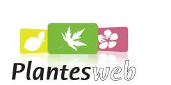logo plantes-web