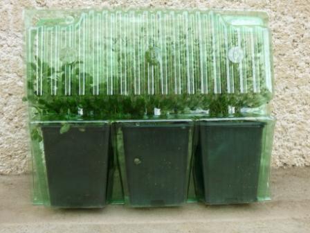 Emballage plantes médicinales